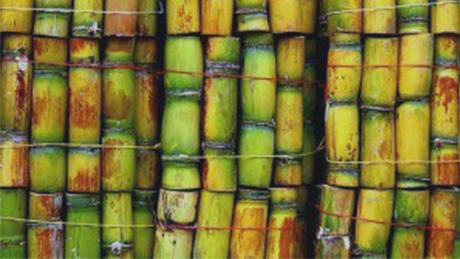 Panneau canne à sucre